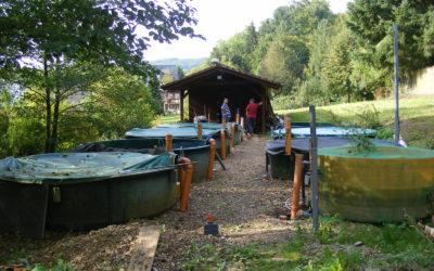 Naturnahe Gewässer für den Fisch des Jahres 2019